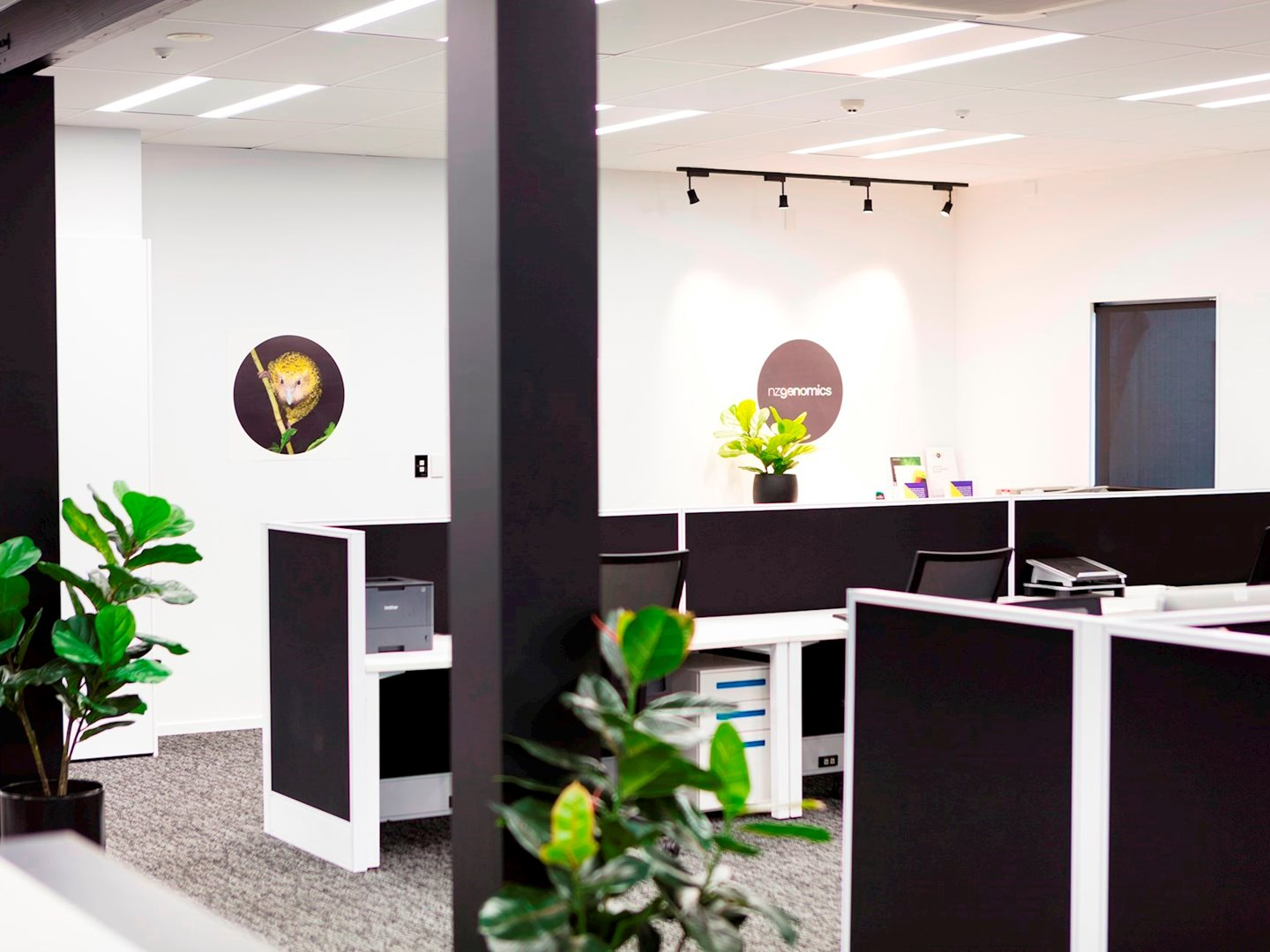 commercial interior design dunedin